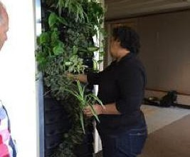 Green Living #Technologies International (GLTi) Announces Plug and Play Living Wall